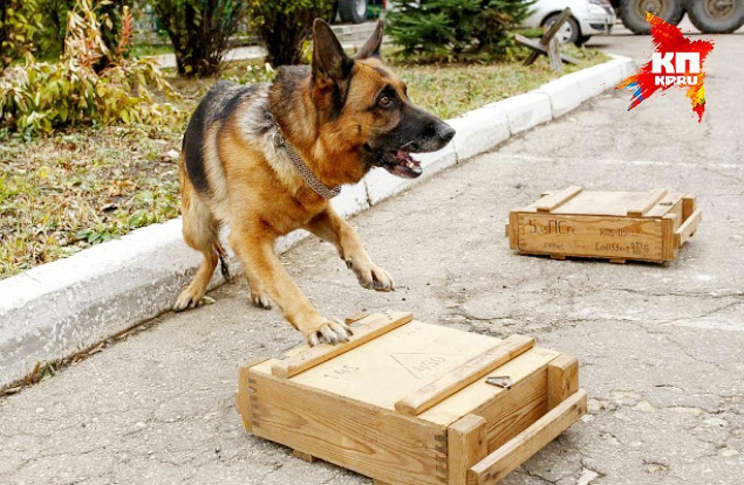Глава отдела Новороссийской таможни заставлял подчиненного строить ему дом
