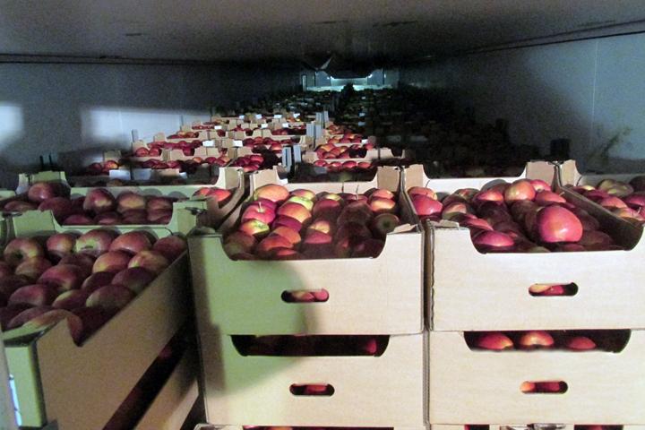 Брянские пограничники  раздавили 20 тонн польских яблок