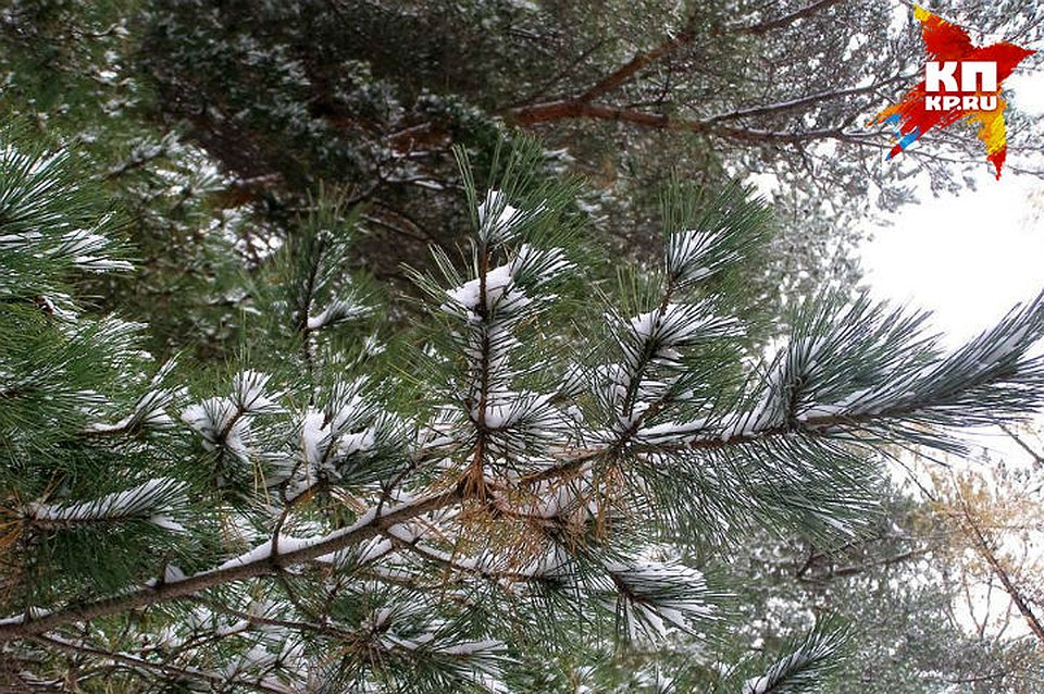 Прогноз погоды вятских полянах