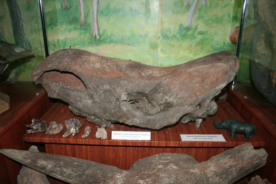 Новосибирские рыболовы отыскали кость носорога, вымершего 15 тыс. лет назад
