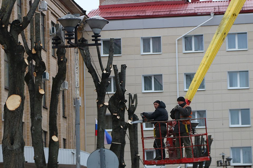 ВБрянске на дорогах Пересвета иКалинина приведут впорядок деревья