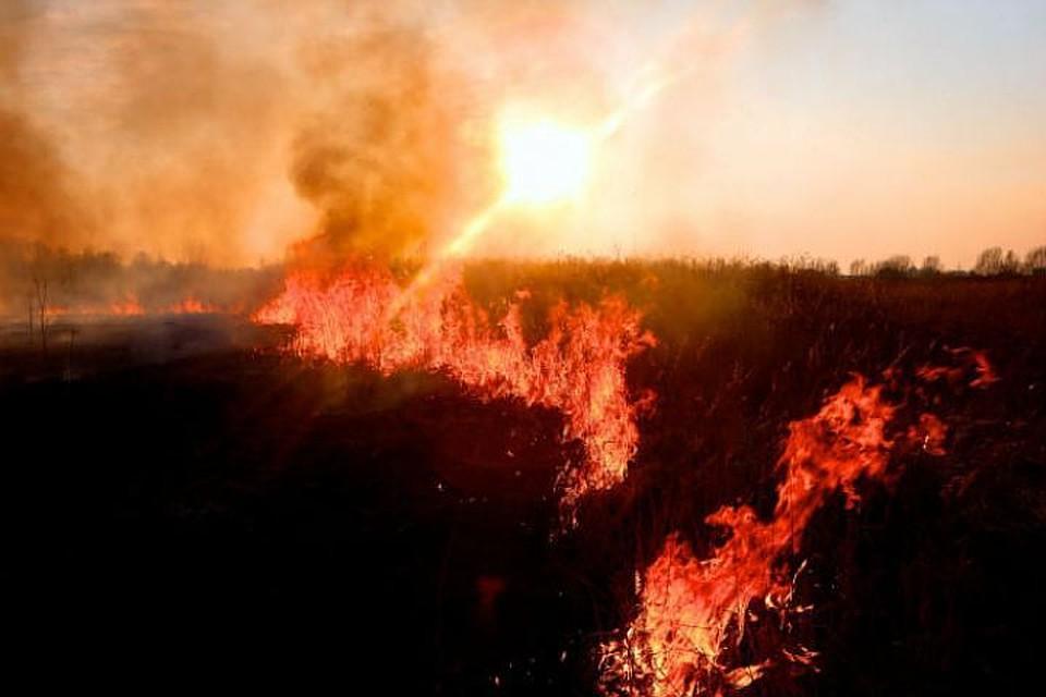 Противопожарный режим вВоронежской области введут с30апреля