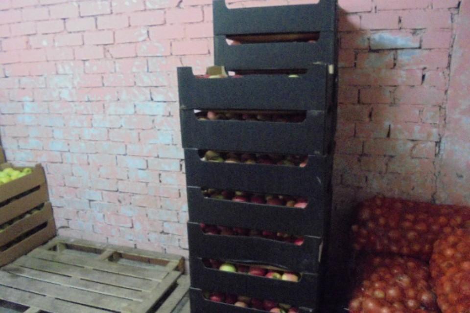 ВПерми уничтожили две тонны запрещенных яблок изПольши