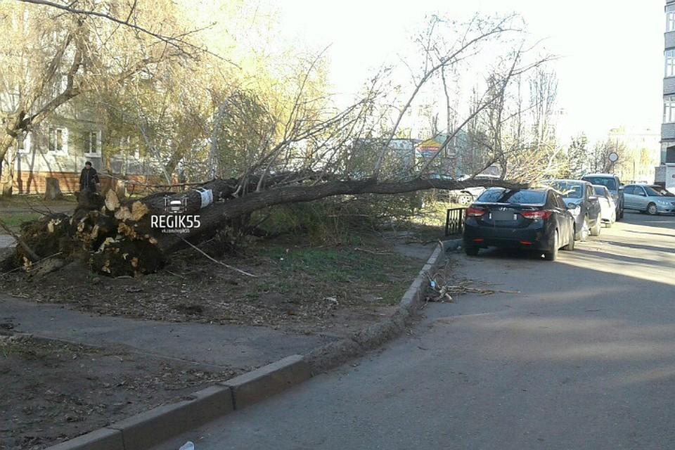 Вомском дворе вырванное ветром дерево рухнуло наиномарку