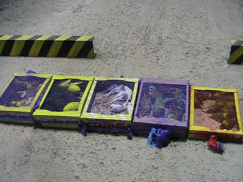 Ростовские таможенники посадили накарантин 51 украинского попугая