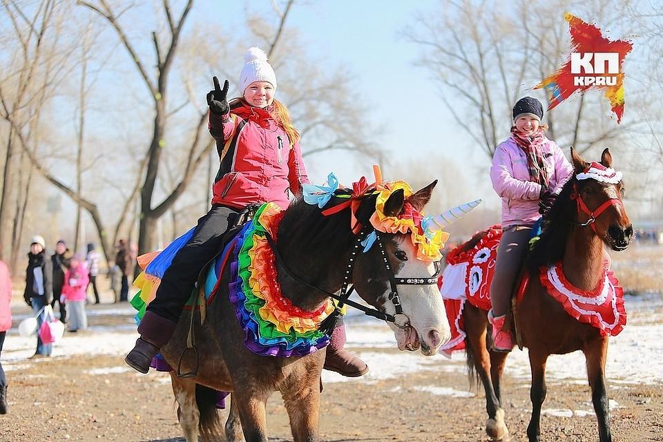 Арбитражный суд позволил лошадям гадить на дорогах, площадях ивпарках Красноярска