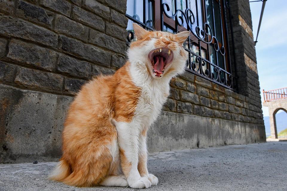 ВНижнем Новгороде бывшие супруги будут делить кота всуде