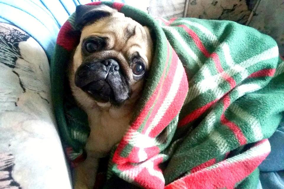 Хозяин оплатил задолженность чтобы снять арест сдивана собаки вМурманске