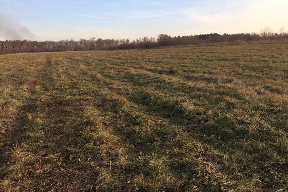 Загрызшую пони стаю собак отловят вАнгарске