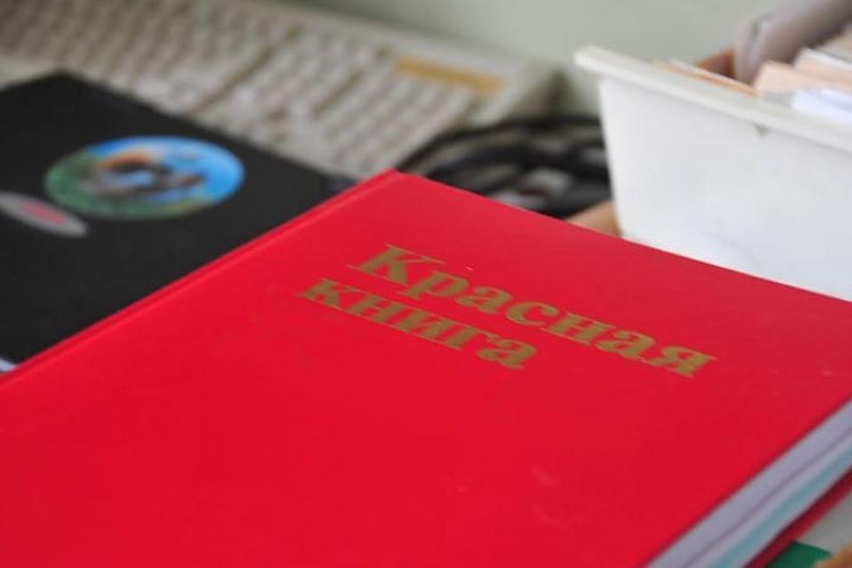 НаСреднем Урале через электронный магазин продавали птиц изКрасной книги