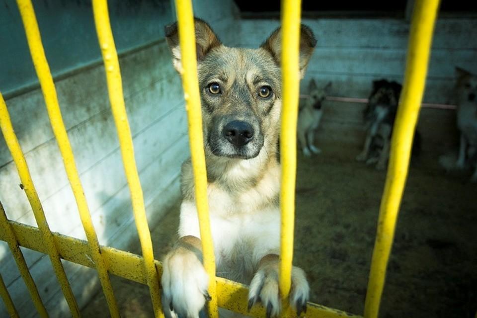 НаОбручева вБратске собачка была убита наглазах у владельца
