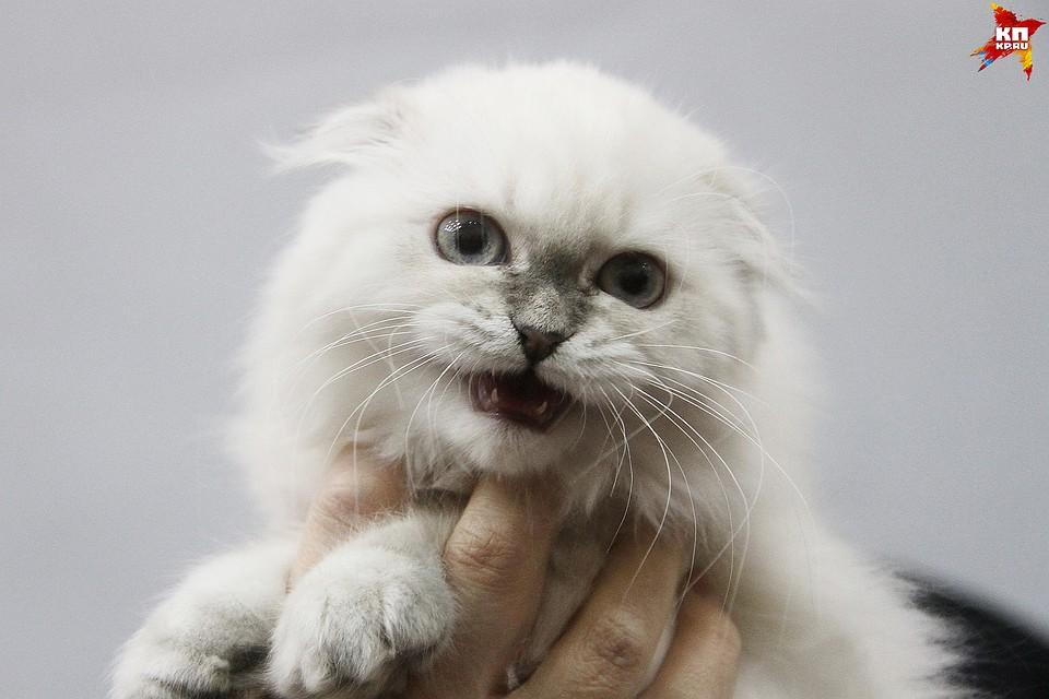 Бешеная кошка покусала 2-х женщин вПочепском районе