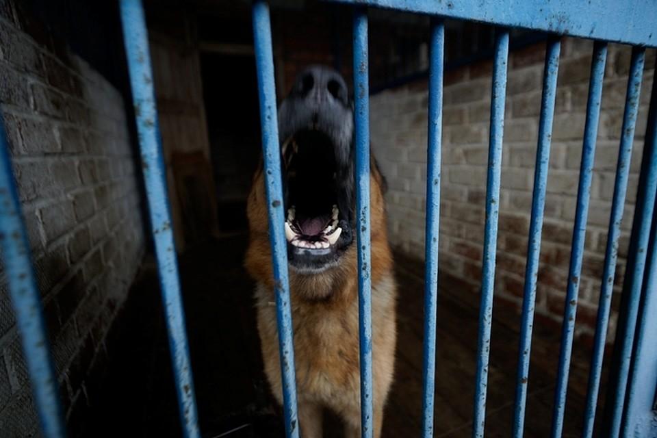 Свердловский детский омбудсмен выступил зазапрет наразведение собак вквартирах