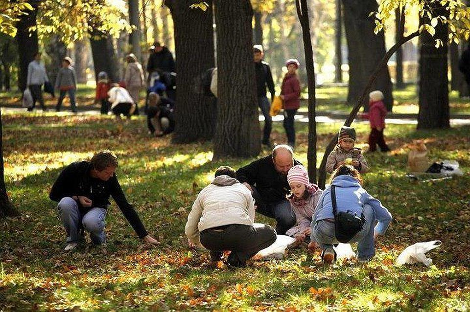 В основном парке Ставрополя любящим природу посоветовали собрать млн. желудей