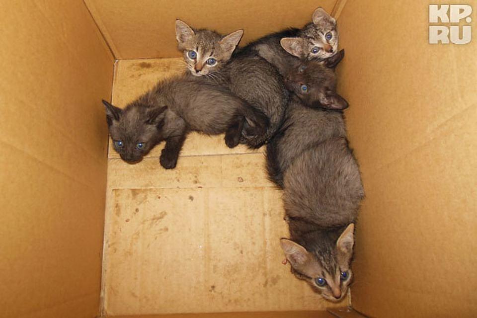 Ради спасения котят изледяной воды петербуржец прыгнул вреку