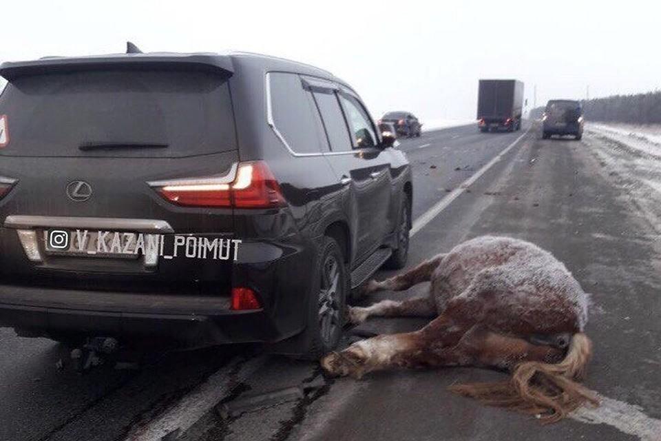 ВМамадышском районе шофёр джипа насмерть сбил лошадь