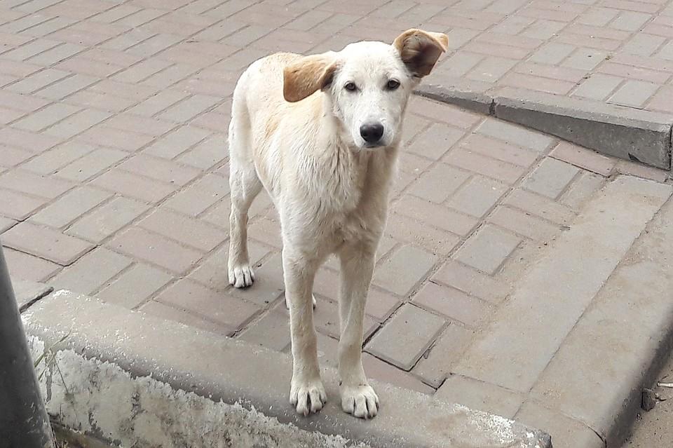 Полсотни собак живьем сгорели вприюте под Воронежем