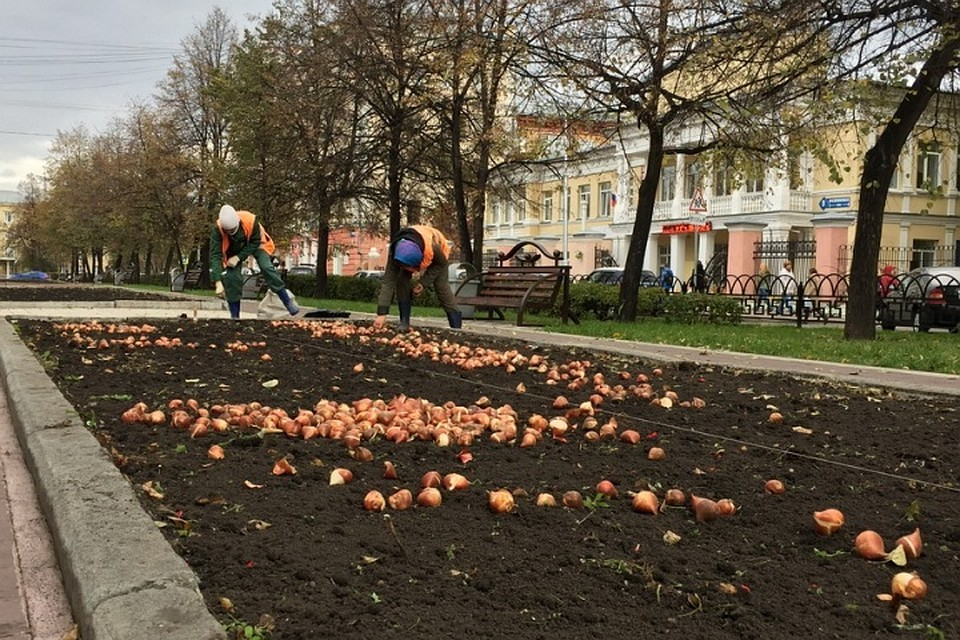 К100-летию города накемеровских клумбах появится неменее 1 млн цветов