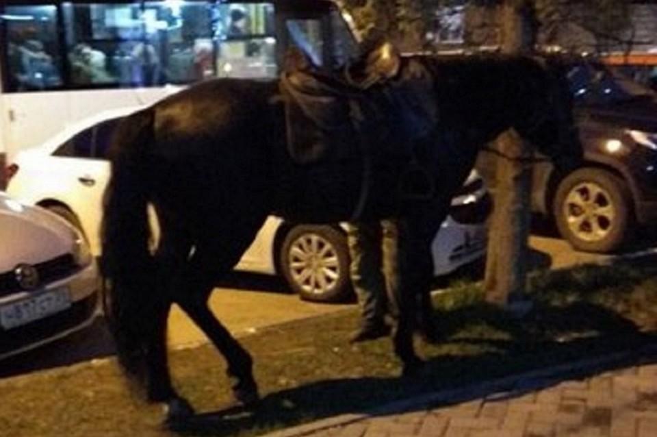 Оштрафован хозяин лошадей, разгуливающих поКисловодску