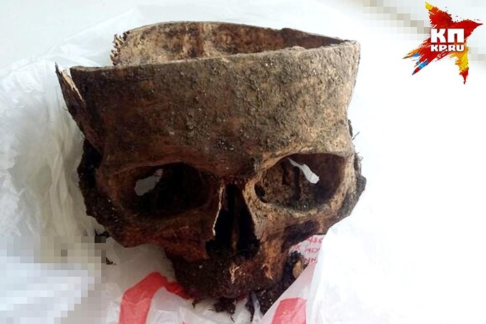 Человеческий череп отыскали наклумбе вовремя уборки школьники вКраснодаре