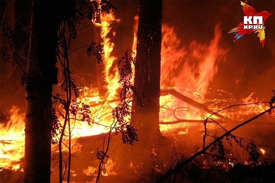 Пожар устранили приморские огнеборцы налесозаготовительной базе