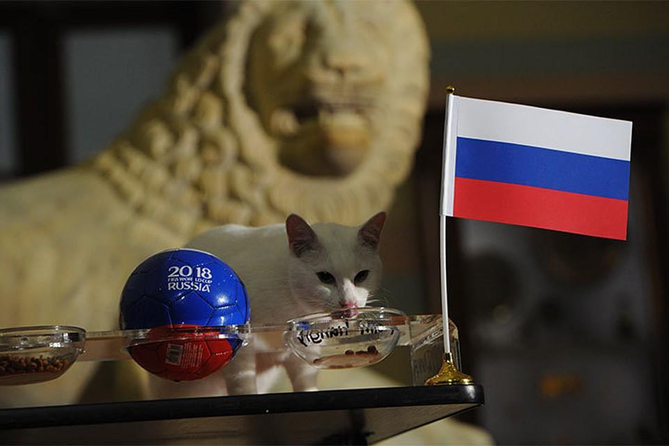 Кот Ахилл предсказал победу сборной РФ впредстоящем матче сЕгиптом