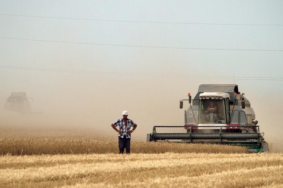 Крымские аграрии собрали 80% урожая ранних зерновых