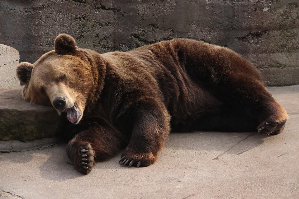 С1сентября Зоопарк Удмуртии будет работать поосеннему графику