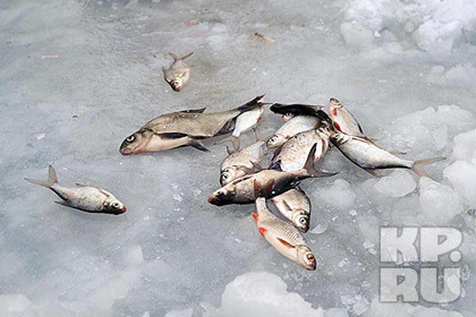 рыбалка весной на гэс