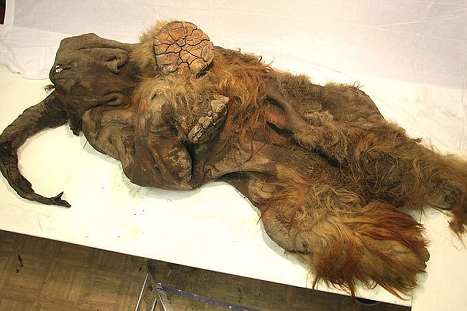 Wooly mammoth carbon dating