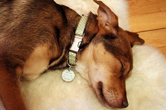 Сделать жетон для собаки