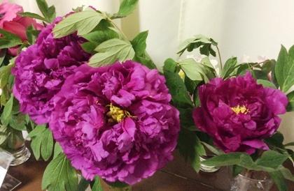 Яркие красавцы могут цвести все лето.