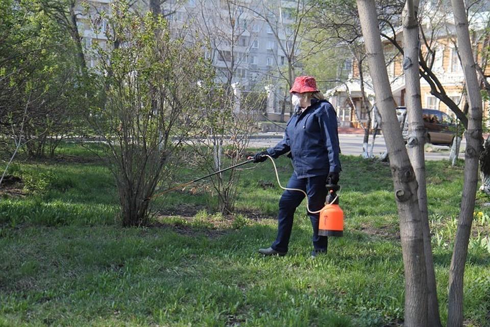 719 жителей Иркутской области пострадали за прошедшую неделю от укусов клещей