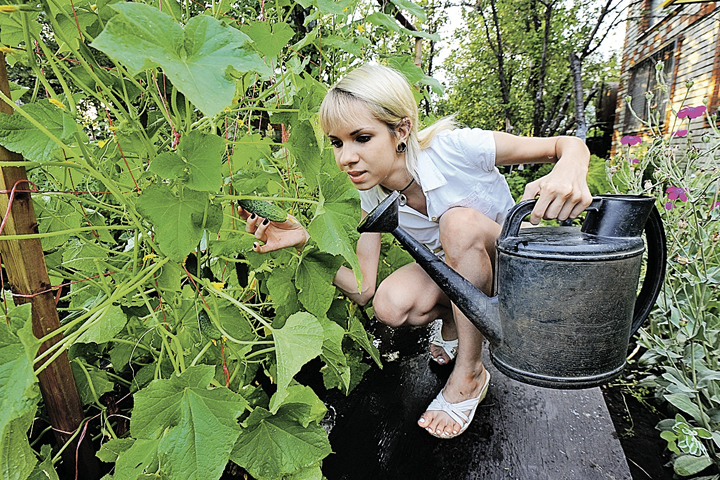 Кто не помнит: на садовом участке по нашим законам в первую очередь полагается выращивать сельхозпродукцию. А вот на дачном - отдыхать.