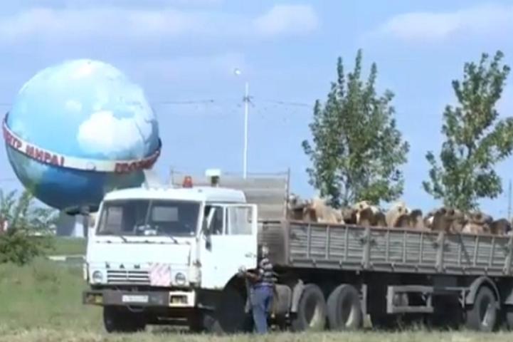 Кадыров подарит малоимущим тысячи овец наКурбан-байрам