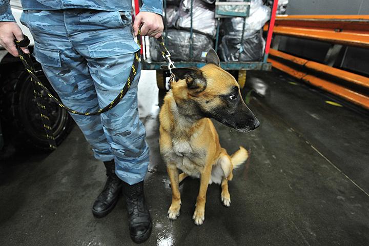 В линейный отдел полиции аэропорта «Домодедово» поступило обращение о пропаже крупной суммы денег