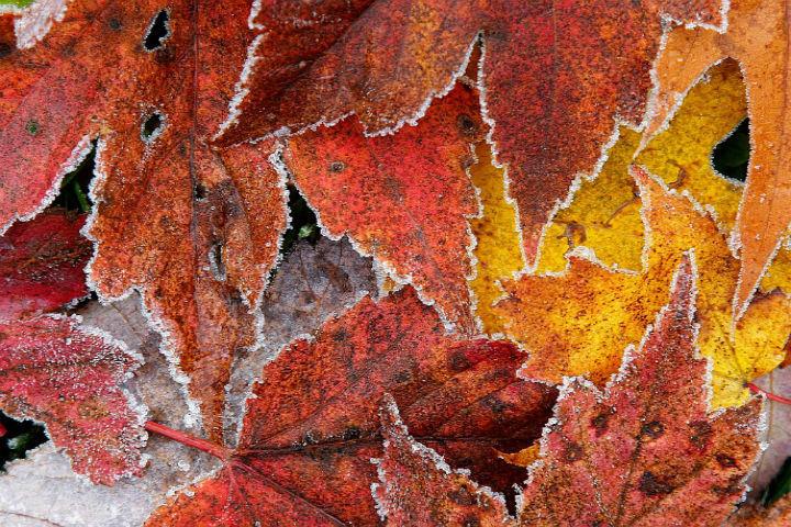 К конце недели в Беларусь придет глубокая, холодная осень