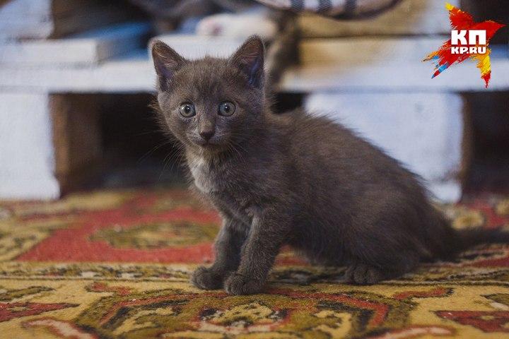 Гражданин Березовского сжег котенка впечи