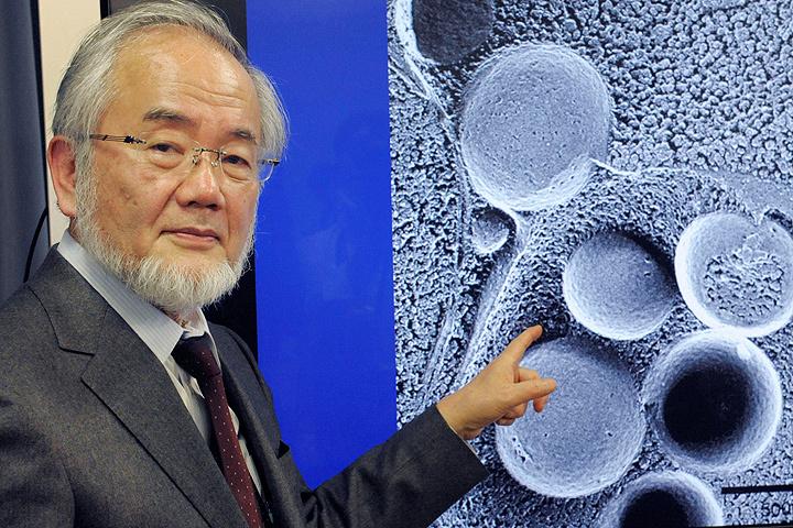 Нобелевский лауреат, японский ученый-биолог Ёсинори Осуми.