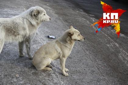 Генпрокуратура опротестовала регламент работы поотлову исодержанию безнадзорных животных вКрасноярске