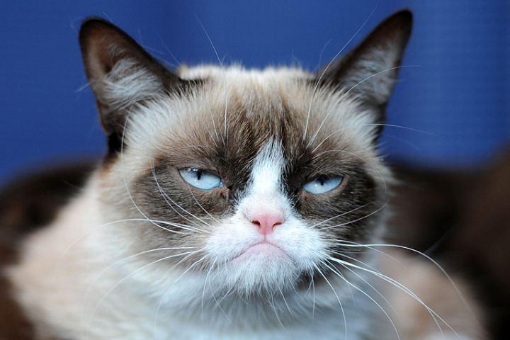 Компания Alibaba ищет кота, который будет торговать «милоту»