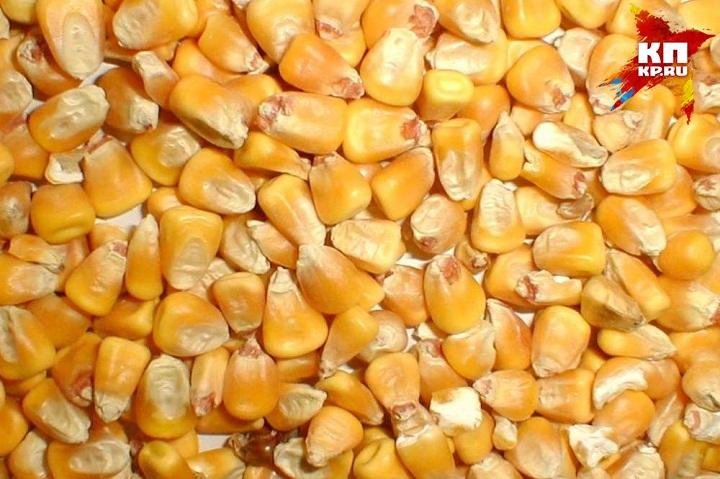 ВУдмуртии выявили 14 вагонов зараженной кукурузы