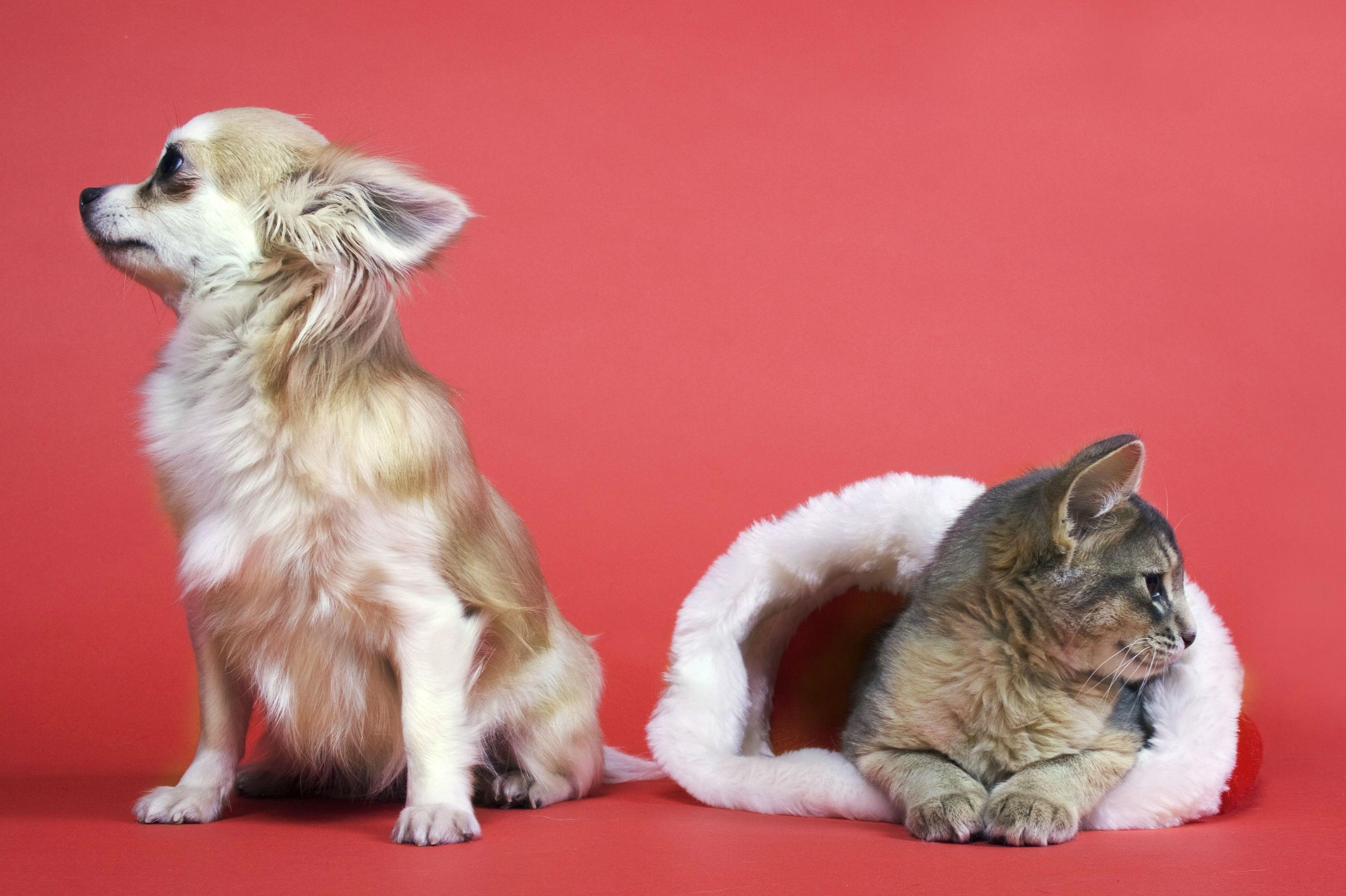 Считается, что выбор домашнего животного во многом отражает характер человека.