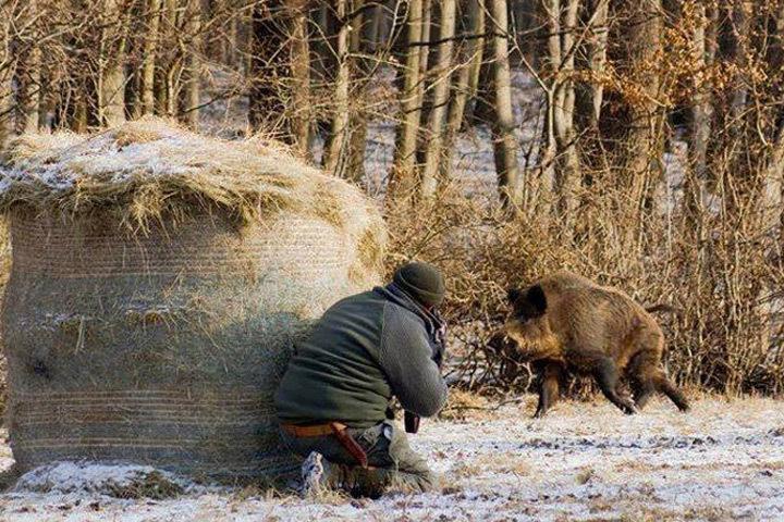 В Эстонии опасаются распространения АЧС в осенне-зимний период. Фото: «КП» - в Северной Европе»