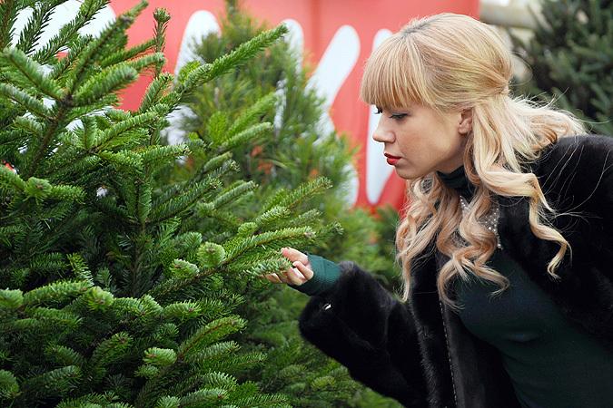 Продавать их будут минимум за 400 рублей - стоимость будет зависеть от высоты и породы дерева.