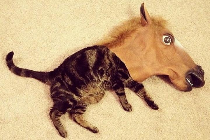 ВНовосибирске ветеринар помог нелегально отправить 20 лошадей вКазахстан