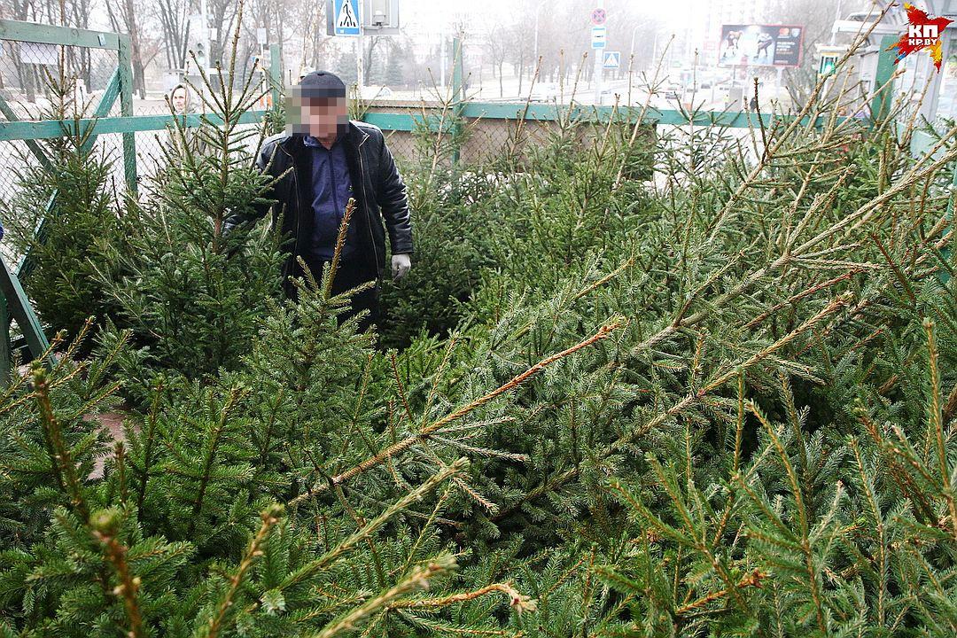 ВРакове сучастка украли живую елку— «Новогодняя» кража