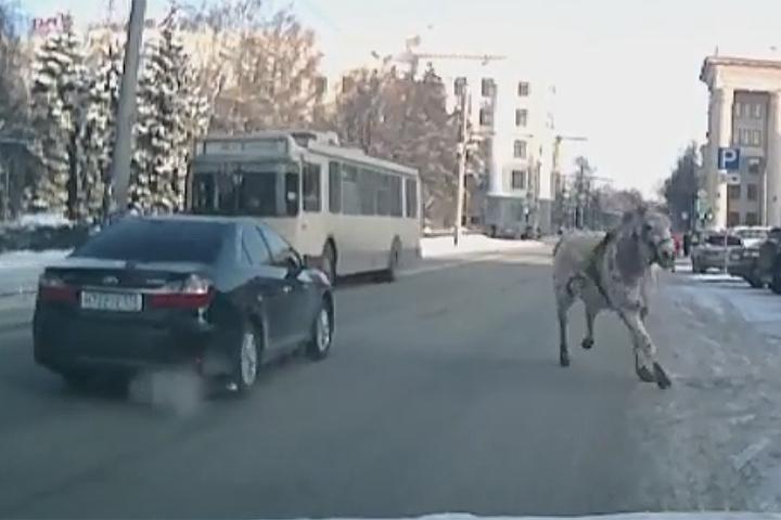 Лошадь чуть нестала первопричиной  трагедии  вЧелябинске