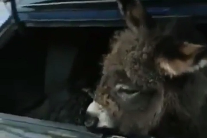 Дагестанец хотел отправить своего осла вдругой город напассажирском автобусе