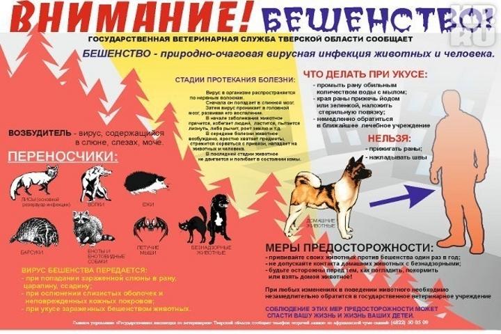 Остерегайтесь бешенства Фото: Ветеринарная инспекция